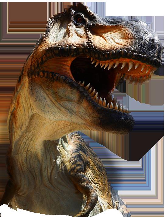 t_rex_home_trasp